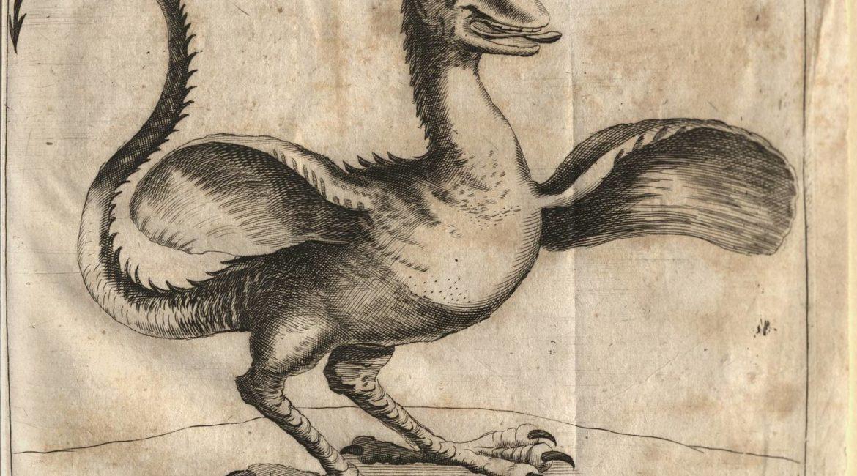 """Miscellanea Curiosa medico-physica Academiae Naturae Curiosorum"" - rycina przedstawiająca Bazyliszka"